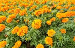 Frühlingshintergrund mit schönen Blumen Lizenzfreie Stockbilder
