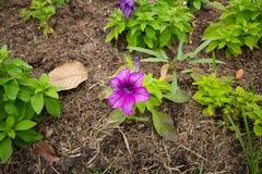 Frühlingshintergrund mit schönen Blumen Lizenzfreie Stockfotografie