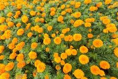 Frühlingshintergrund mit schönen Blumen Stockfotos