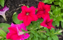 Frühlingshintergrund mit schönen Blumen Stockfoto