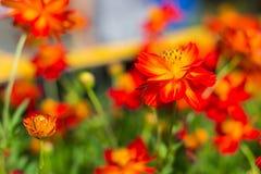Frühlingshintergrund mit schönen Blumen Lizenzfreie Stockfotos