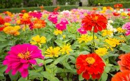 Frühlingshintergrund mit schönen Blumen Stockbild