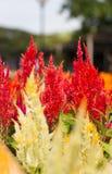 Frühlingshintergrund mit schönen Blumen Stockfotografie