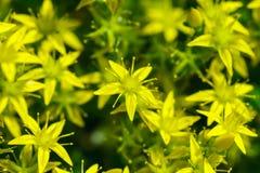 Frühlingshintergrund mit schönen gelben Blumen Stockfotos