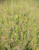 Frühlingshintergrund mit schöner Blume der Wiese Stockfotos