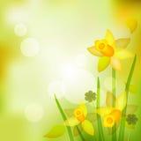 Frühlingshintergrund Lizenzfreie Stockfotos