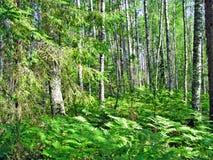 Frühlingsholz Lizenzfreies Stockfoto