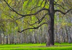 Frühlingsholz Lizenzfreie Stockfotos