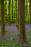 Frühlingsholz Stockfotografie