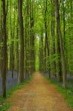Frühlingsholz Stockbild
