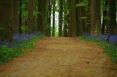 Frühlingsholz Lizenzfreie Stockfotografie