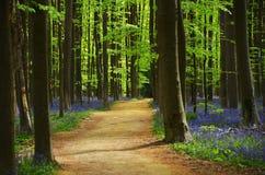 Frühlingsholz Lizenzfreie Stockbilder