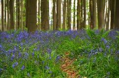 Frühlingsholz Stockfotos