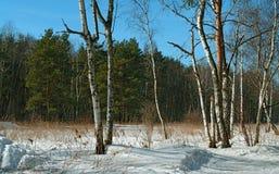 Frühlingsholz. Stockbild