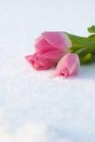 Frühlingskarte mit Tulpen im Schnee Stockbilder