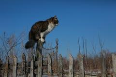Frühlingskatze, die auf einem Stangenzaun sitzt Lizenzfreies Stockfoto