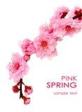 Frühlingskirschblumen Stockfoto