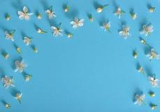Frühlingskirschblumen auf blauem Hintergrund Stockbilder