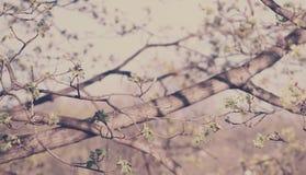 Frühlingsknospen Stockbilder