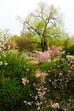 Frühlingskommen Stockbild