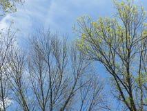 Frühlingskommen Lizenzfreie Stockfotos