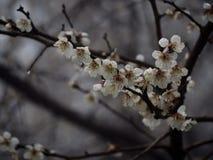 Frühlingskommen Lizenzfreies Stockfoto