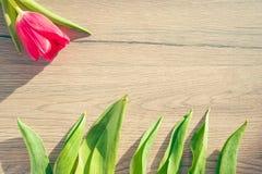 Frühlingskonzept - Tulpenblätter auf dem hölzernen Hintergrund lizenzfreies stockbild
