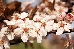 Frühlingskonzeptblume lizenzfreie stockbilder