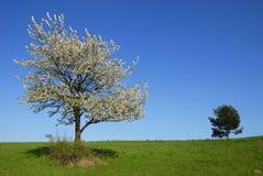 Frühlingslandschaft Stockfotos