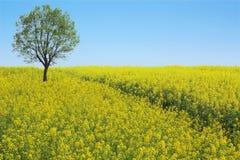 Frühlingslandschaft Stockbild