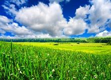 Frühlingslandschaft Lizenzfreie Stockfotografie