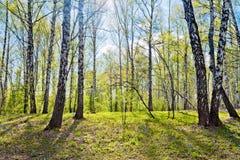 Frühlingslandschaft. Stockfoto