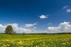 Frühlingslandschaft. Lizenzfreies Stockbild
