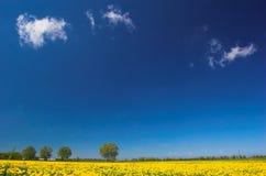 Frühlingslandschaft Lizenzfreies Stockbild