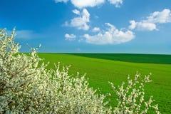 Frühlingslandschaft, Baum in der Blüte Lizenzfreie Stockbilder