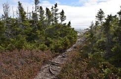 Frühlingslandschaft entlang der Vater-Troy-` s Spur in Neufundland Kanada, nahe Flatrock stockfotografie