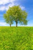 Frühlingslandschaft, Feld und blauer Himmel Lizenzfreie Stockbilder