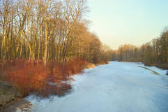 Frühlingslandschaft im Teich Stockbilder