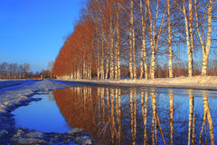 Frühlingslandschaft im Wald Lizenzfreies Stockfoto