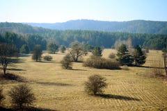 Frühlingslandschaft mit Bäumen auf dem Feld Lizenzfreie Stockfotos
