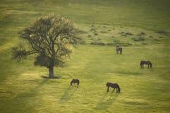Frühlingslandschaft mit Baum und Pferd am Sonnenuntergang Lizenzfreies Stockbild