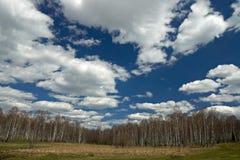 Frühlingslandschaft mit Birkenwald, blauem Himmel und Wolken. Stockbild