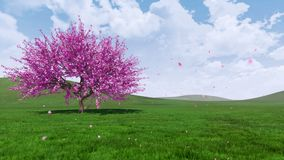 Frühlingslandschaft mit blühendem Kirschblüte-Kirschbaum 4K stock abbildung