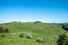 Frühlingslandschaft mit blühenden Büschen und Fahrrad schleppen Stockbild