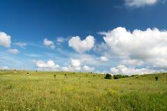 Frühlingslandschaft mit blauem Himmel und grünem Rasen lizenzfreies stockbild