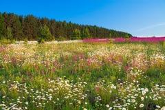 Frühlingslandschaft mit Blumen auf einer Wiese und einem Sonnenuntergang Stockfotos