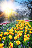 Frühlingslandschaft mit bunten Tulpen lizenzfreie stockfotografie