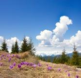 Frühlingslandschaft mit dem bewölkten Himmel und der Blume Lizenzfreies Stockbild