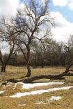 Frühlingslandschaft mit den Resten der Schneedecke Stockfoto