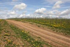 Frühlingslandschaft mit der Straße, die für den Horizont und die jungen Schösslinge verlässt lizenzfreie stockfotos